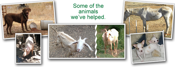 Some of the animals we've helped.