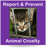 Report & Prevent Animal Cruelty
