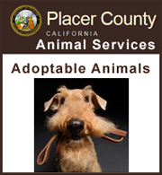 Adoptable animals from PCAS