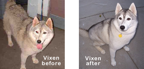 Vixen before and after