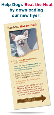 Help Dogs Beat the Heat ad for flyer cover